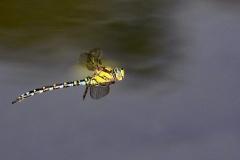 Cäcilie van Hagen: Libellensommer