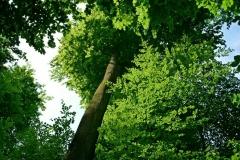 Volker Düsterloh Im Wald