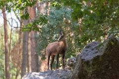 Heiner Ott Wildpark Gangelt